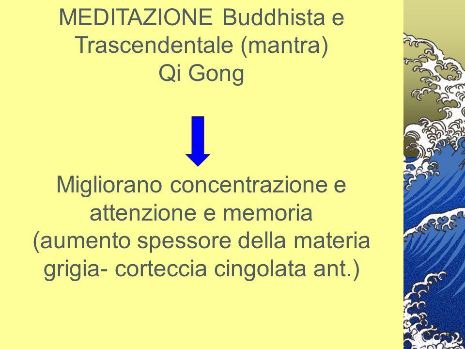 MEDITAZIONE Buddhista e Trascendentale (mantra) Qi Gong Migliorano concentrazione e attenzione e memoria (aumento spessore della materia grigia- corte