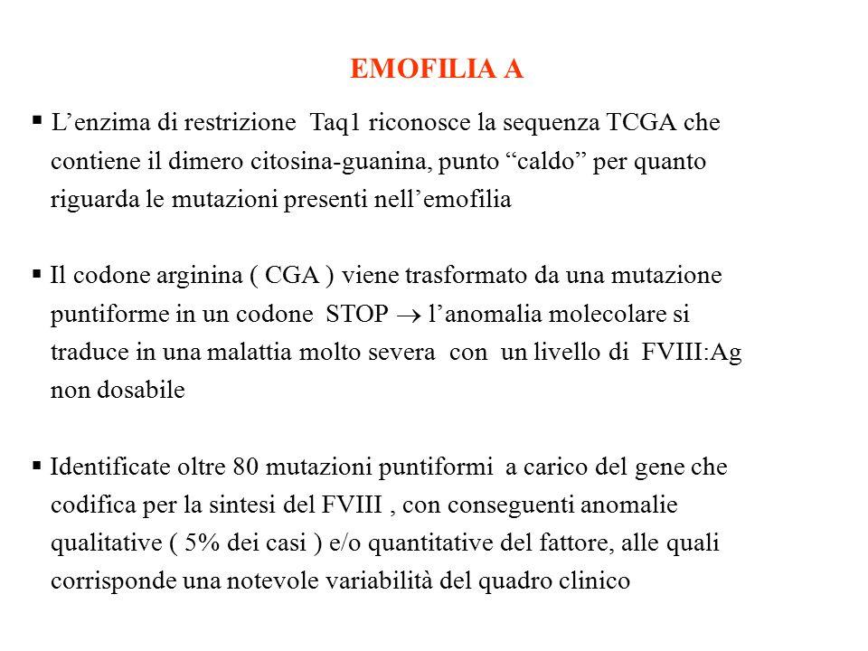 """EMOFILIA A  L'enzima di restrizione Taq1 riconosce la sequenza TCGA che contiene il dimero citosina-guanina, punto """"caldo"""" per quanto riguarda le mut"""