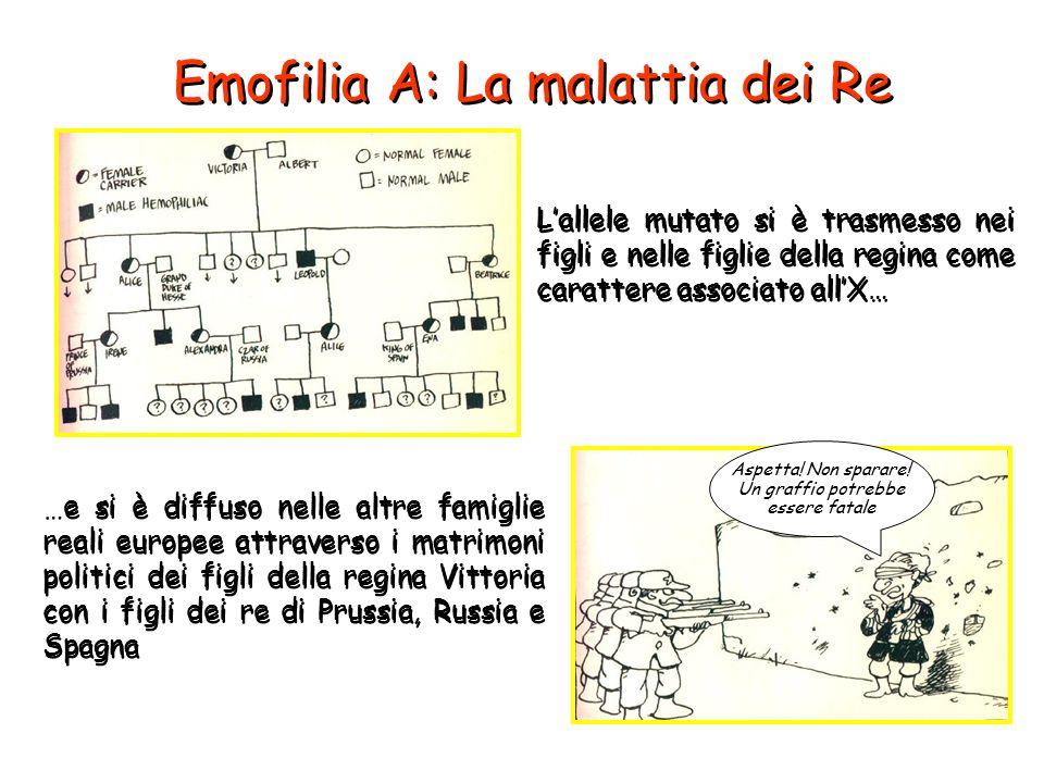 L'allele mutato si è trasmesso nei figli e nelle figlie della regina come carattere associato all'X… Emofilia A: La malattia dei Re …e si è diffuso ne