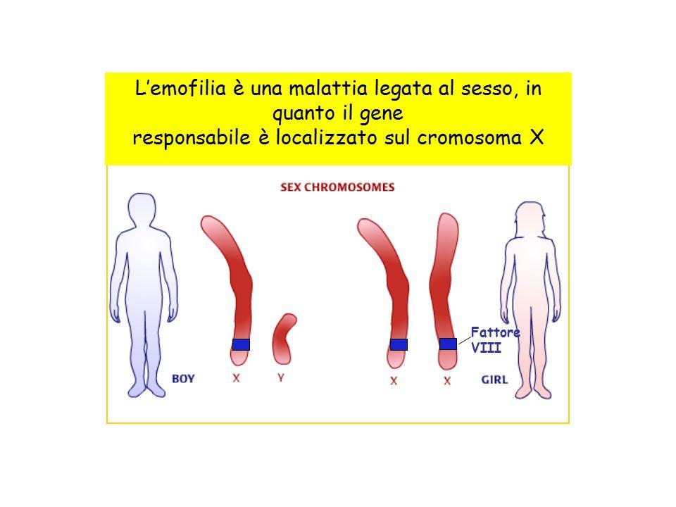 L'emofilia è una malattia legata al sesso, in quanto il gene responsabile è localizzato sul cromosoma X Fattore VIII