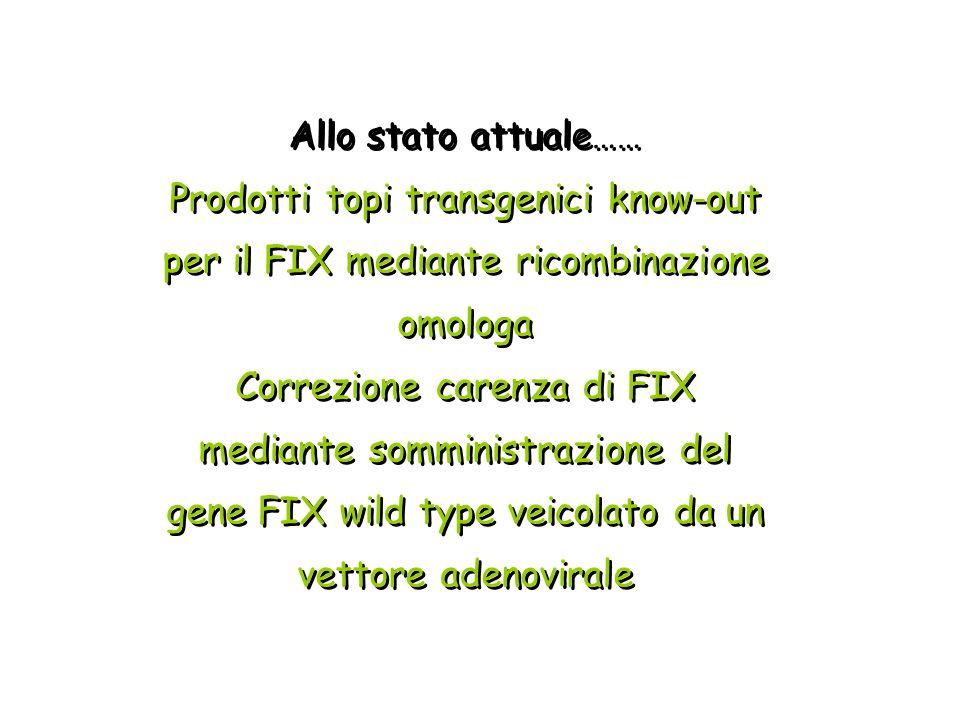 Allo stato attuale…… Prodotti topi transgenici know-out per il FIX mediante ricombinazione omologa Correzione carenza di FIX mediante somministrazione