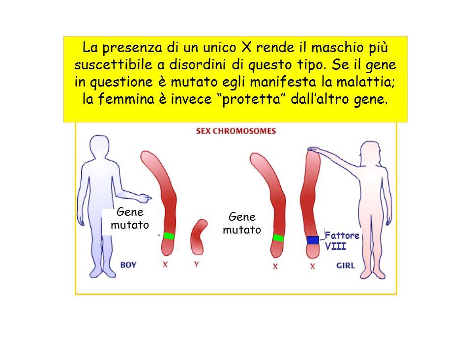 Un ragazzo diventa emofiliaco quando eredita l'X col gene mutato dalla madre portatrice (in quanto dal padre può ereditare solo il cromosoma Y che non ha il gene).