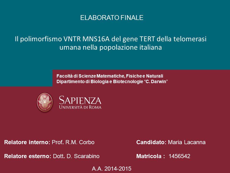 Il polimorfismo VNTR MNS16A del gene TERT della telomerasi umana nella popolazione italiana ELABORATO FINALE Facoltà di Scienze Matematiche, Fisiche e