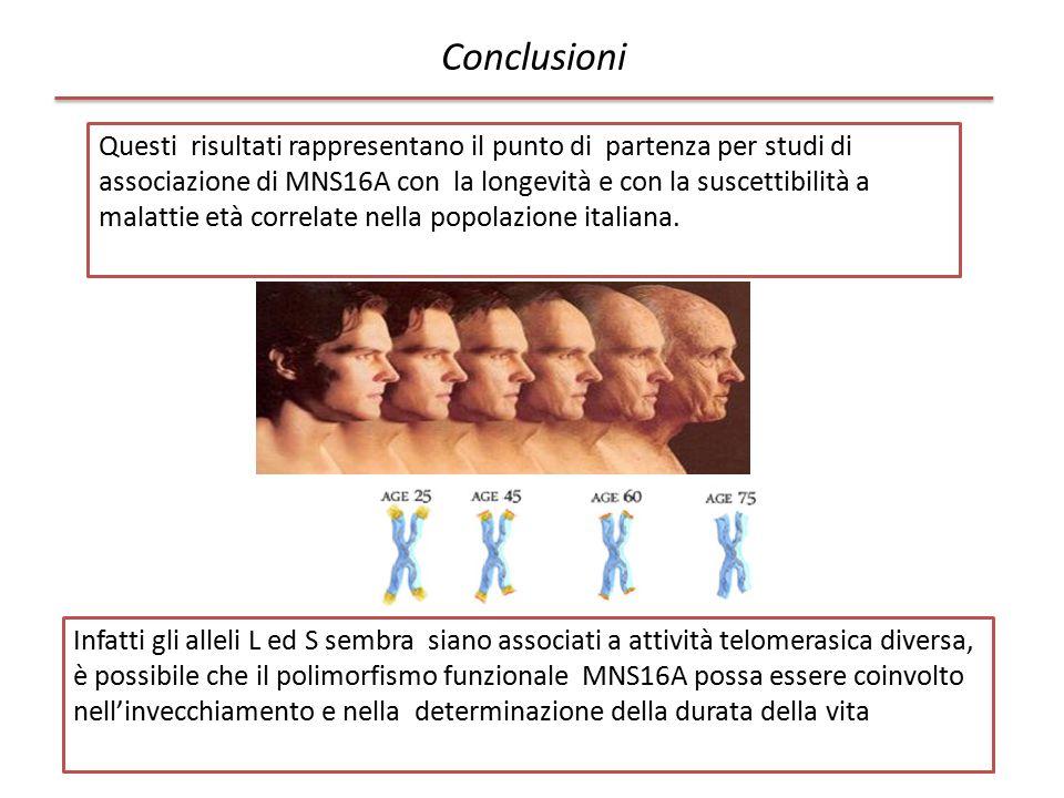 Conclusioni Questi risultati rappresentano il punto di partenza per studi di associazione di MNS16A con la longevità e con la suscettibilità a malatti