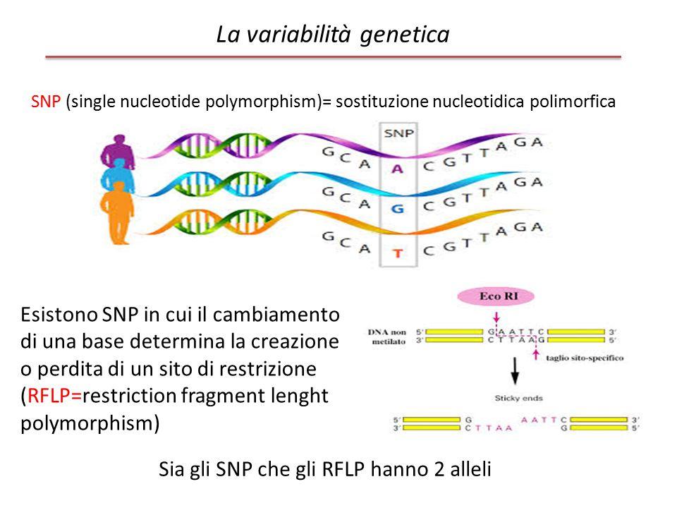 SNP (single nucleotide polymorphism)= sostituzione nucleotidica polimorfica Esistono SNP in cui il cambiamento di una base determina la creazione o pe