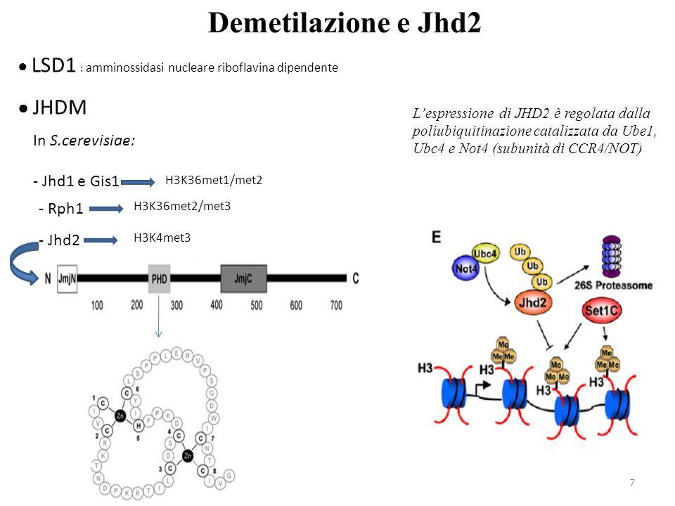7 Demetilazione e Jhd2 ● LSD1 : amminossidasi nucleare riboflavina dipendente ● JHDM In S.cerevisiae: - Jhd1 e Gis1 H3K36met1/met2 - Rph1 H3K36met2/me