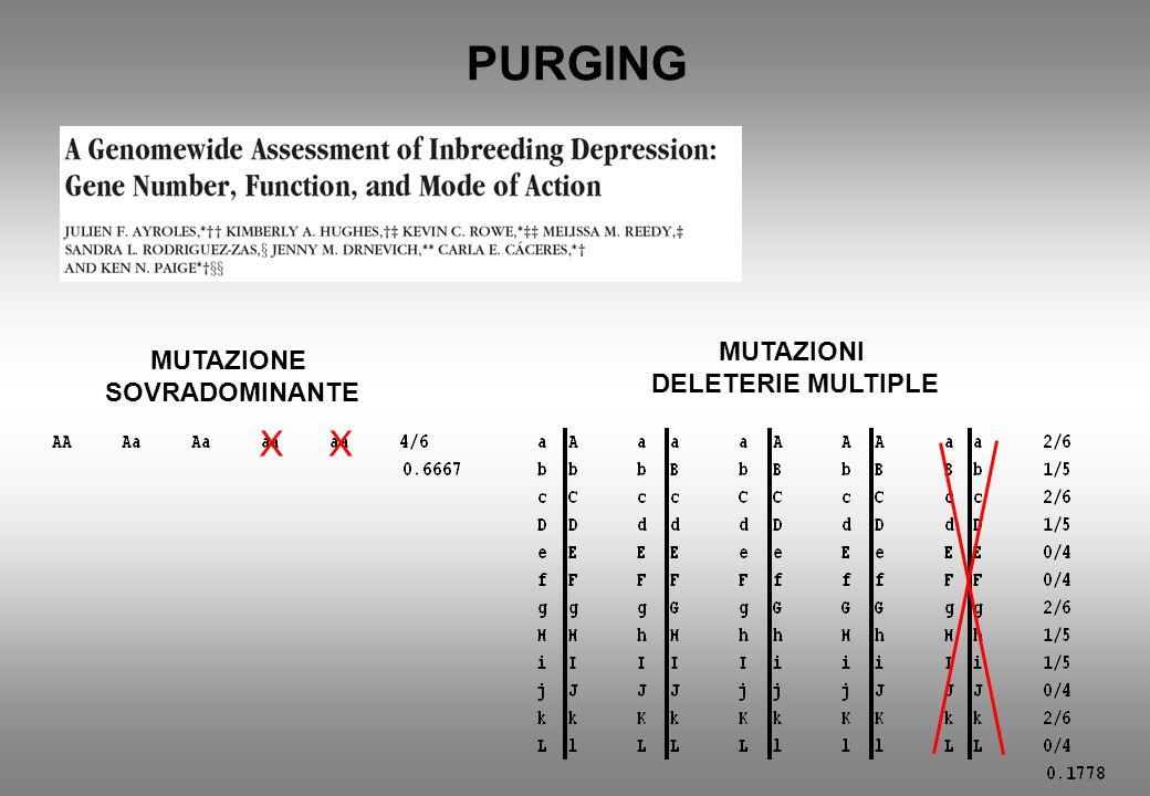 PURGING MUTAZIONE SOVRADOMINANTE MUTAZIONI DELETERIE MULTIPLE XX