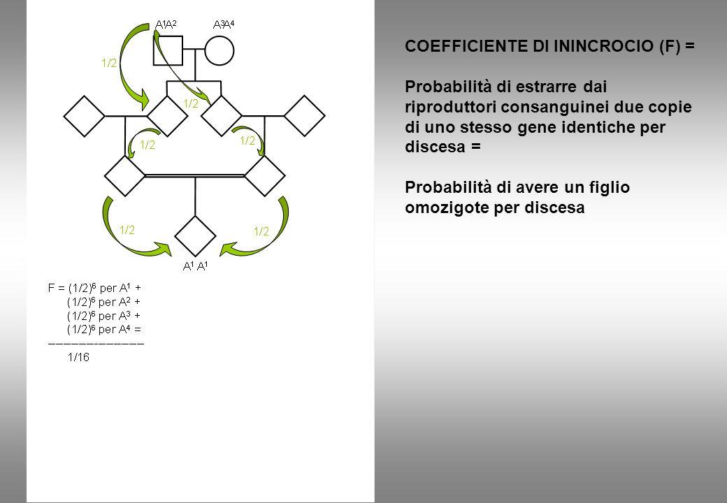 COEFFICIENTE DI ININCROCIO (F) = Probabilità di estrarre dai riproduttori consanguinei due copie di uno stesso gene identiche per discesa = Probabilità di avere un figlio omozigote per discesa