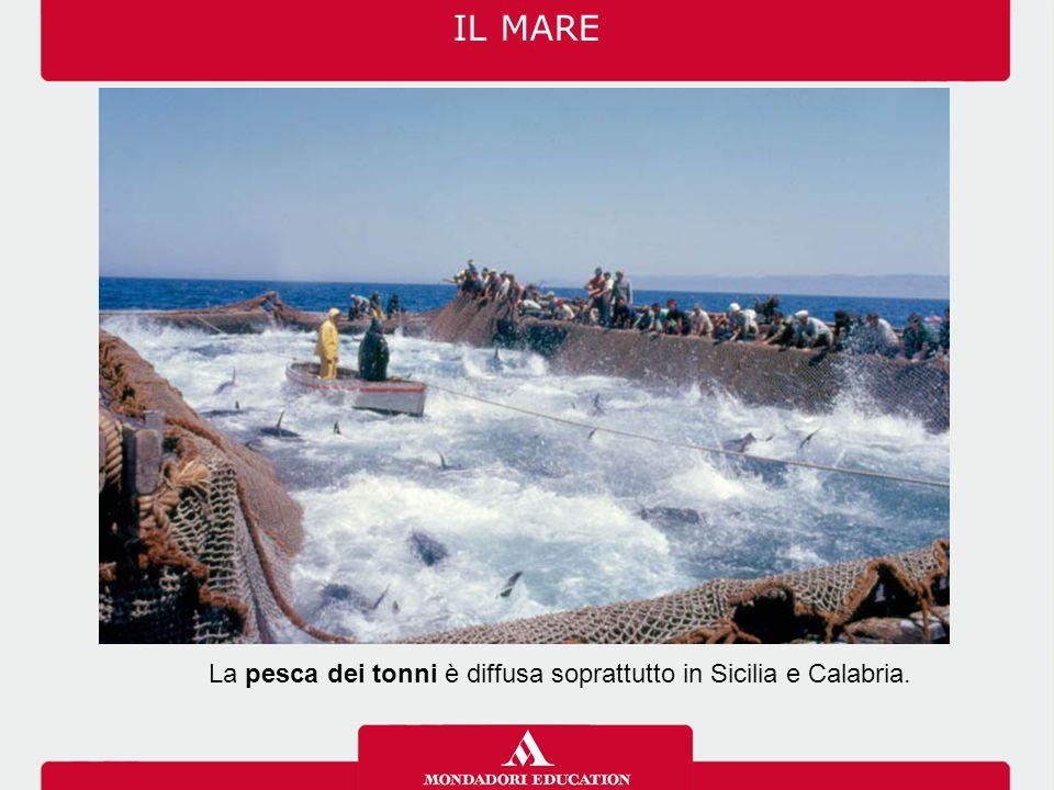 La pesca dei tonni è diffusa soprattutto in Sicilia e Calabria. IL MARE