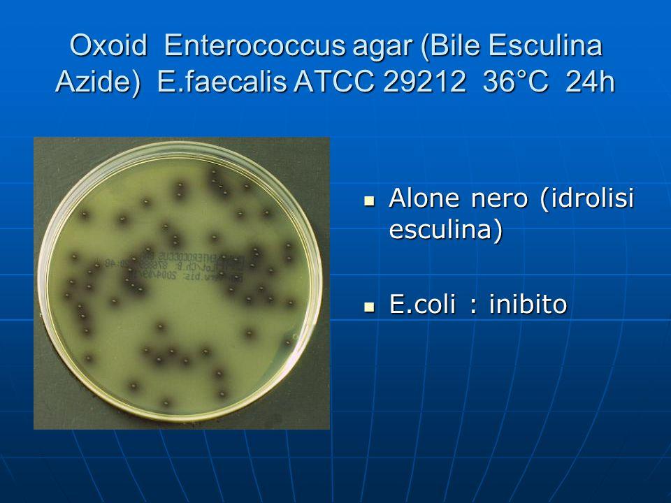 Oxoid Enterococcus agar (Bile Esculina Azide) E.faecalis ATCC 29212 36°C 24h Alone nero (idrolisi esculina) Alone nero (idrolisi esculina) E.coli : in