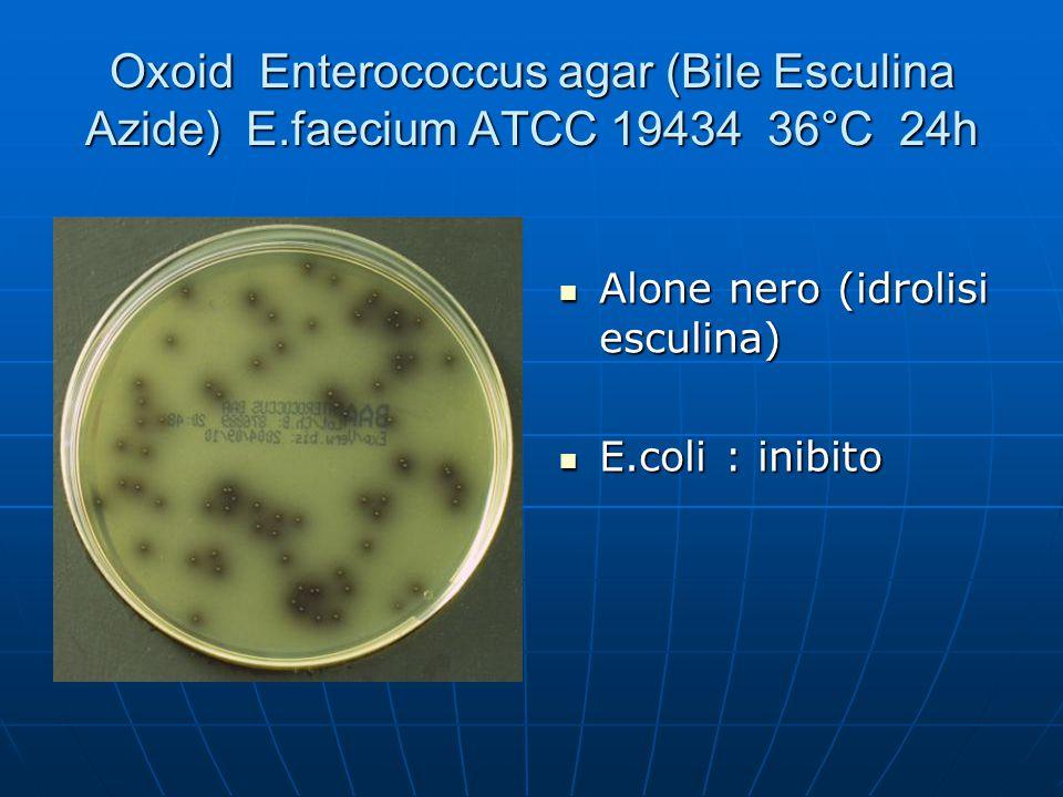 Oxoid Enterococcus agar (Bile Esculina Azide) E.faecium ATCC 19434 36°C 24h Alone nero (idrolisi esculina) Alone nero (idrolisi esculina) E.coli : ini