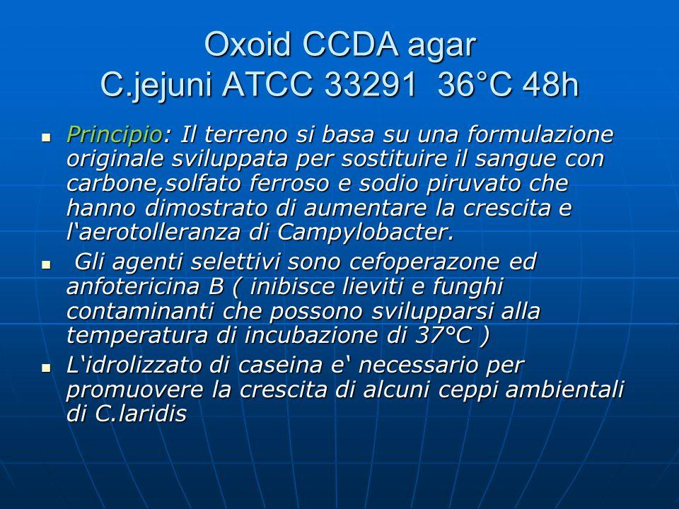Oxoid CCDA agar C.jejuni ATCC 33291 36°C 48h Principio: Il terreno si basa su una formulazione originale sviluppata per sostituire il sangue con carbo