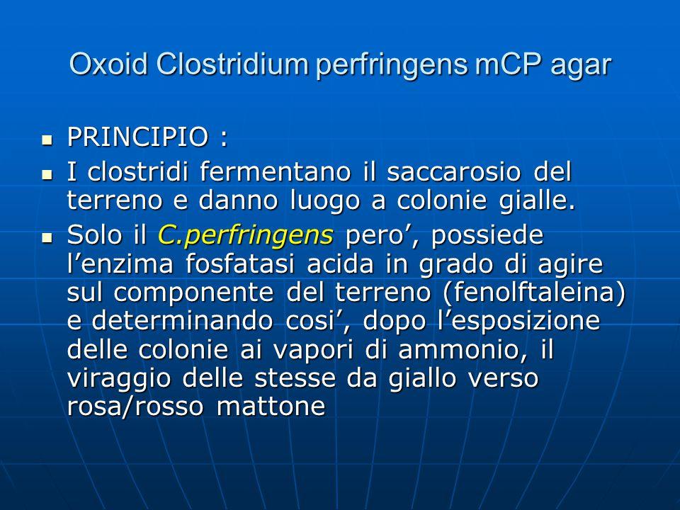 Oxoid Clostridium perfringens mCP agar PRINCIPIO : PRINCIPIO : I clostridi fermentano il saccarosio del terreno e danno luogo a colonie gialle. I clos