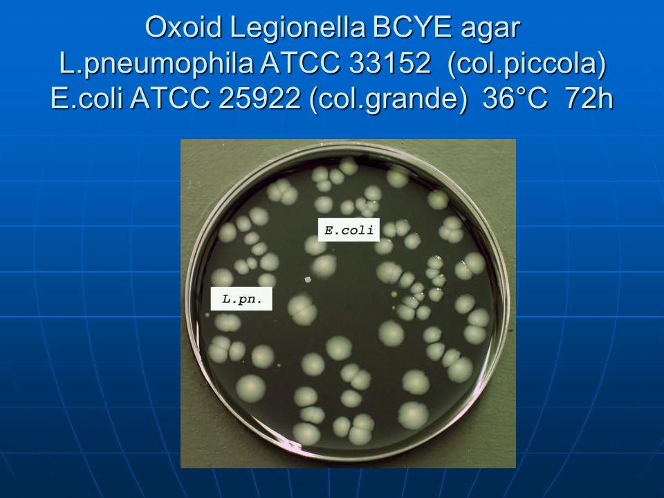 Oxoid Legionella BCYE agar L.pneumophila ATCC 33152 (col.piccola) E.coli ATCC 25922 (col.grande) 36°C 72h