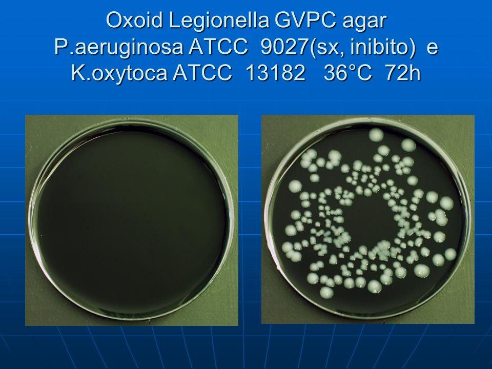Oxoid Legionella GVPC agar P.aeruginosa ATCC 9027(sx, inibito) e K.oxytoca ATCC 13182 36°C 72h