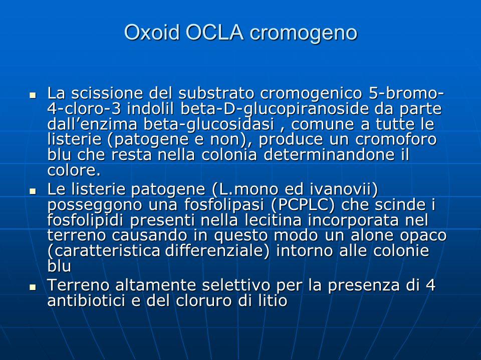 Oxoid OCLA cromogeno La scissione del substrato cromogenico 5-bromo- 4-cloro-3 indolil beta-D-glucopiranoside da parte dall'enzima beta-glucosidasi, c