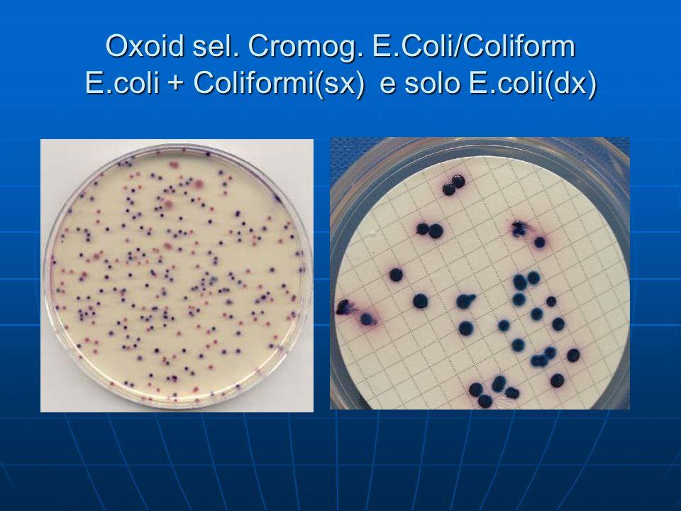 Oxoid sel. Cromog. E.Coli/Coliform E.coli + Coliformi(sx) e solo E.coli(dx)