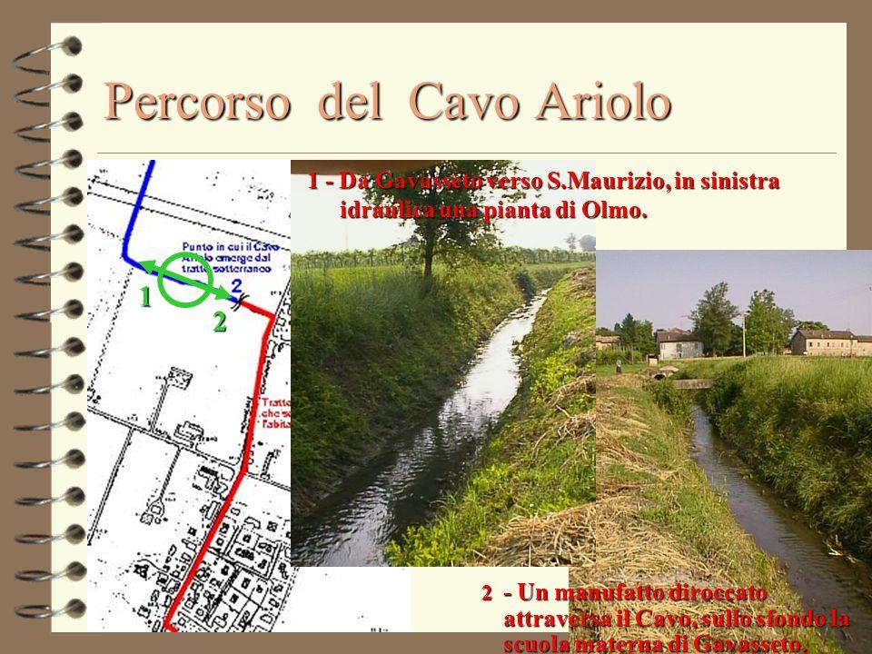 Percorso del Cavo Ariolo 1 2 1 - Da Gavasseto verso S.Maurizio, in sinistra idraulica una pianta di Olmo. 2 - Un manufatto diroccato attraversa il Cav
