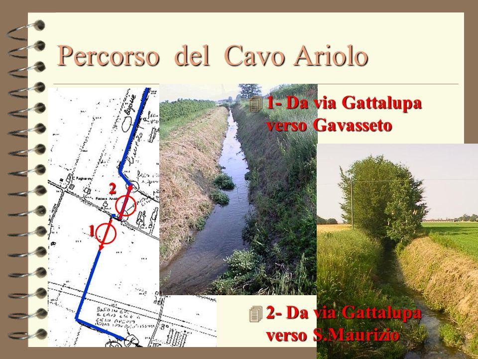 Percorso del Cavo Ariolo 1 2 4 1- Da via Gattalupa verso Gavasseto 4 2- Da via Gattalupa verso S.Maurizio