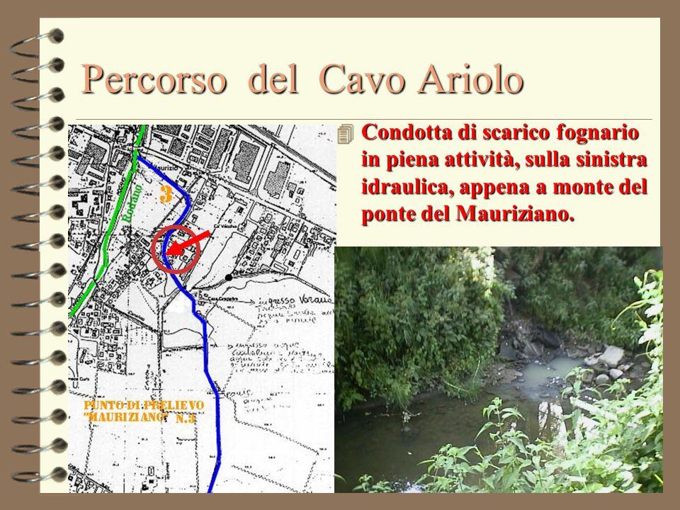 Percorso del Cavo Ariolo 4 Condotta di scarico fognario in piena attività, sulla sinistra idraulica, appena a monte del ponte del Mauriziano.