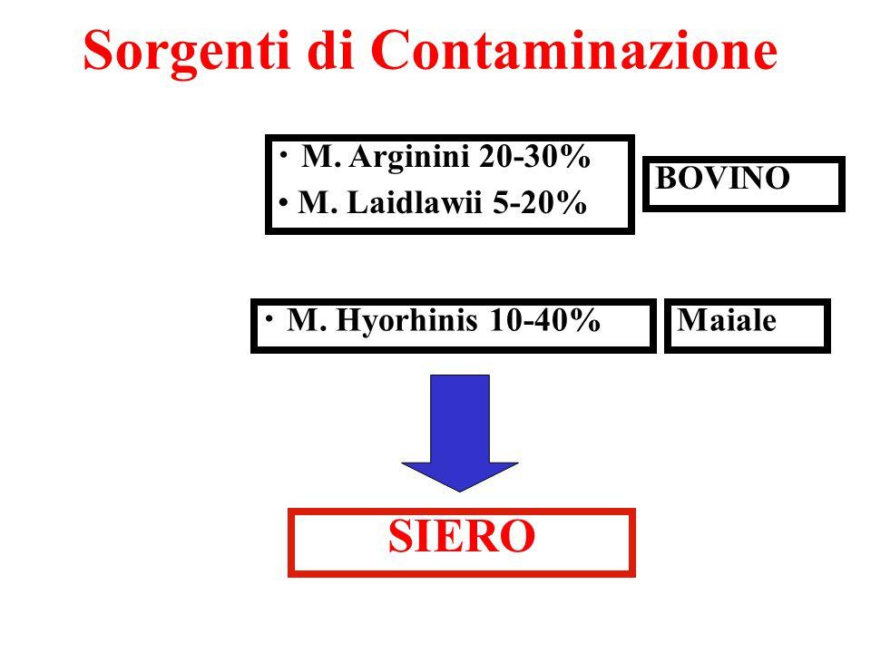 Sorgenti di Contaminazione M. Hyorhinis 10-40% M. Arginini 20-30% M. Laidlawii 5-20% BOVINO SIERO Maiale