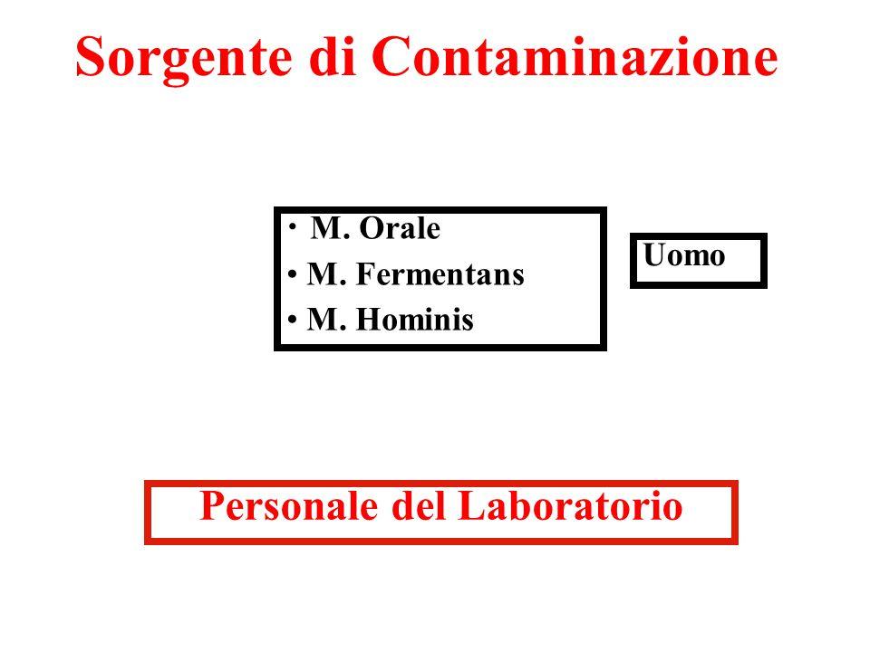 Sorgente di Contaminazione M. Orale M. Fermentans M. Hominis Uomo Personale del Laboratorio