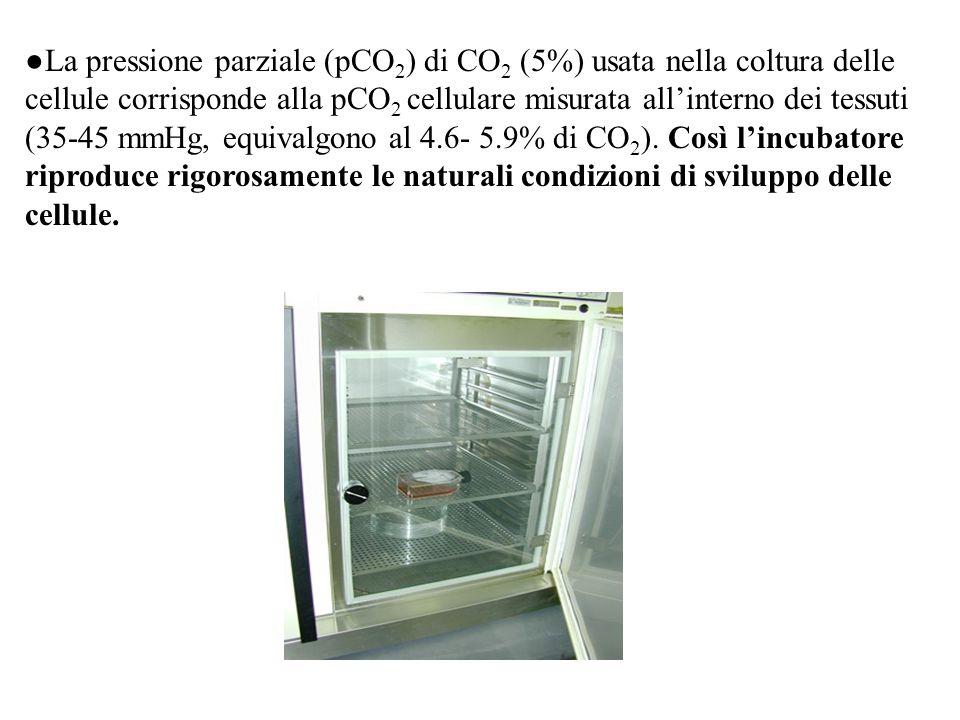 ●La pressione parziale (pCO 2 ) di CO 2 (5%) usata nella coltura delle cellule corrisponde alla pCO 2 cellulare misurata all'interno dei tessuti (35-4