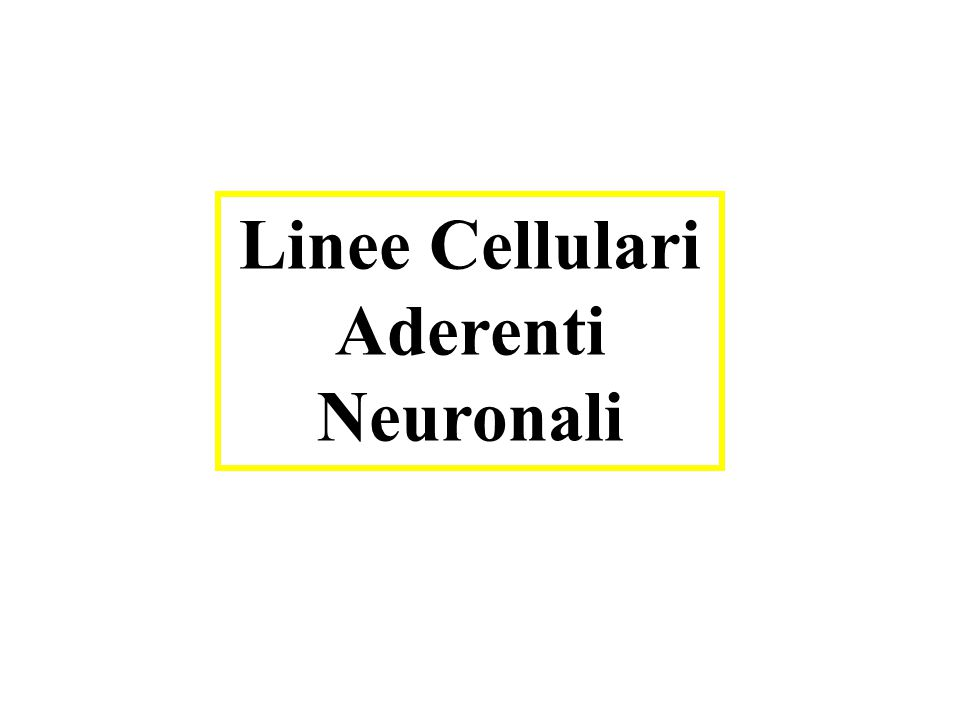 Linee Cellulari Aderenti Neuronali
