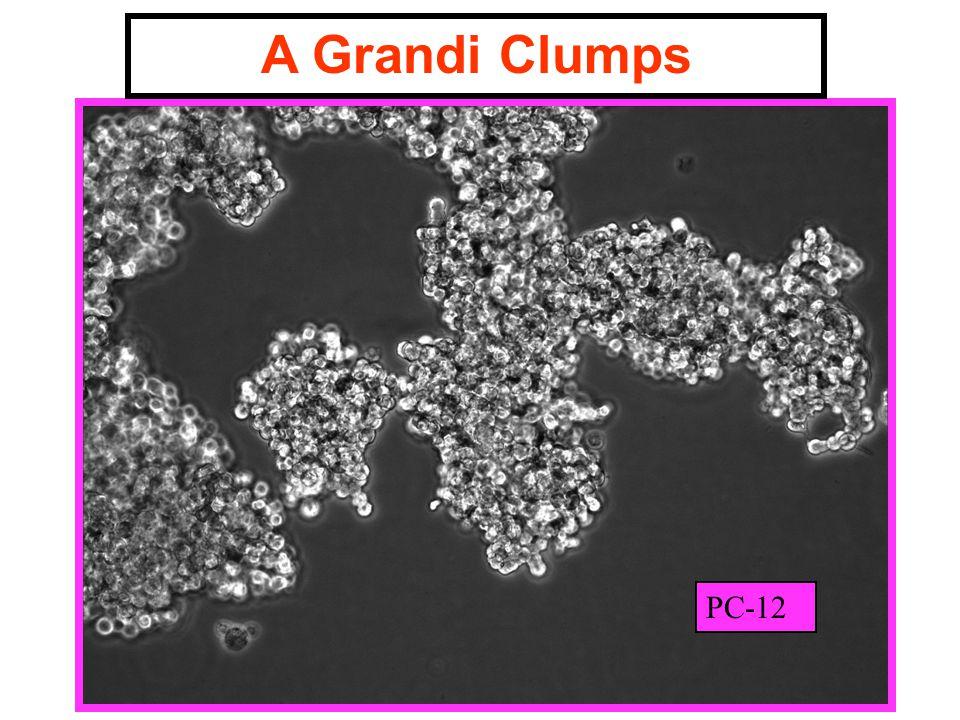A Grandi Clumps