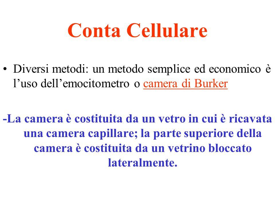 Conta Cellulare Diversi metodi: un metodo semplice ed economico è l'uso dell'emocitometro o camera di Burker -La camera è costituita da un vetro in cu