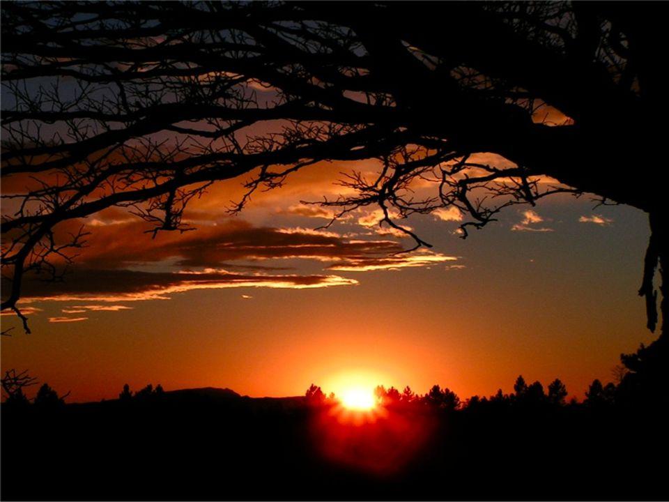 Laudato si, mi Signore, per sora Luna e le Stelle, in cielo l'hai formate clarite e preziose e belle.