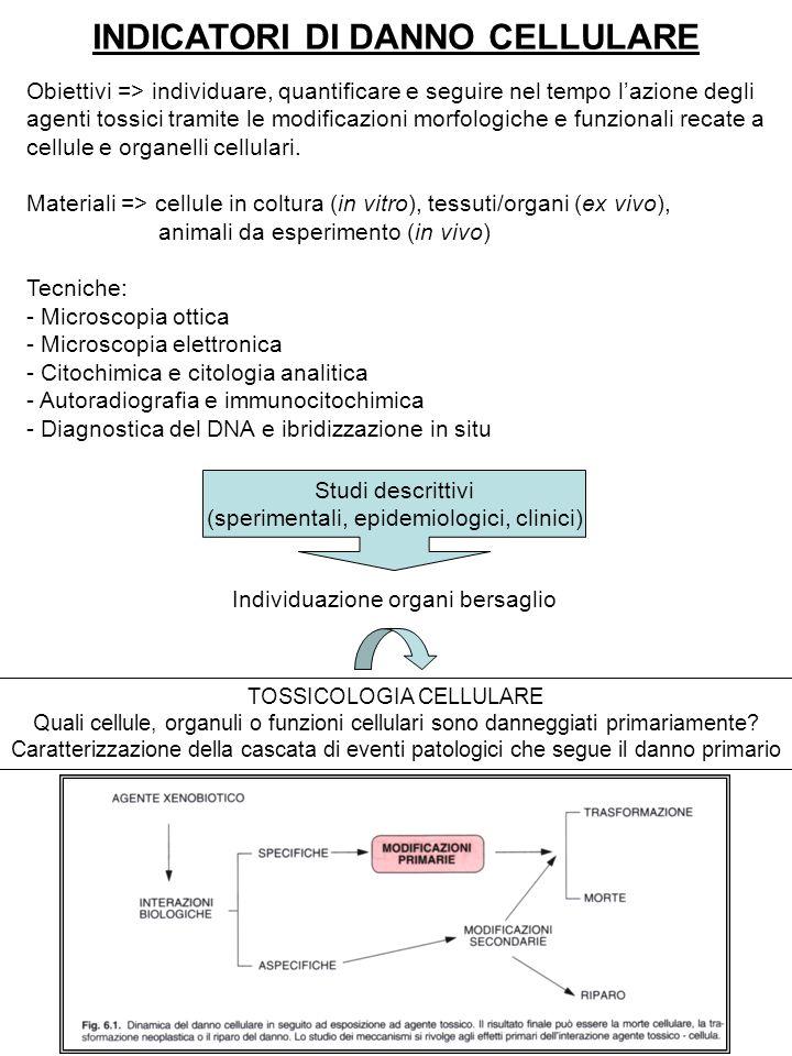 INDICATORI DI DANNO CELLULARE Obiettivi => individuare, quantificare e seguire nel tempo l'azione degli agenti tossici tramite le modificazioni morfol