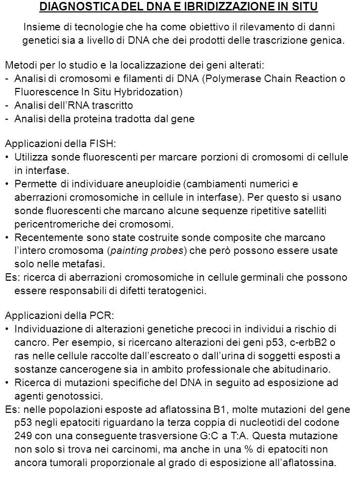 DIAGNOSTICA DEL DNA E IBRIDIZZAZIONE IN SITU Insieme di tecnologie che ha come obiettivo il rilevamento di danni genetici sia a livello di DNA che dei