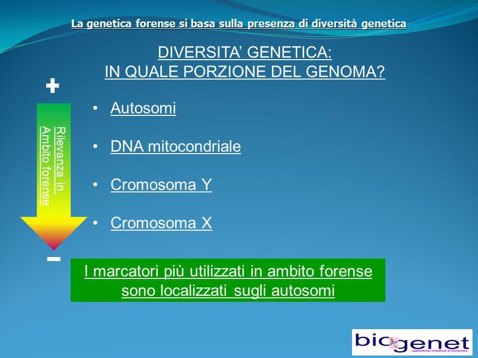 La genetica forense si basa sulla presenza di diversità genetica DIVERSITA' GENETICA: IN QUALE PORZIONE DEL GENOMA.