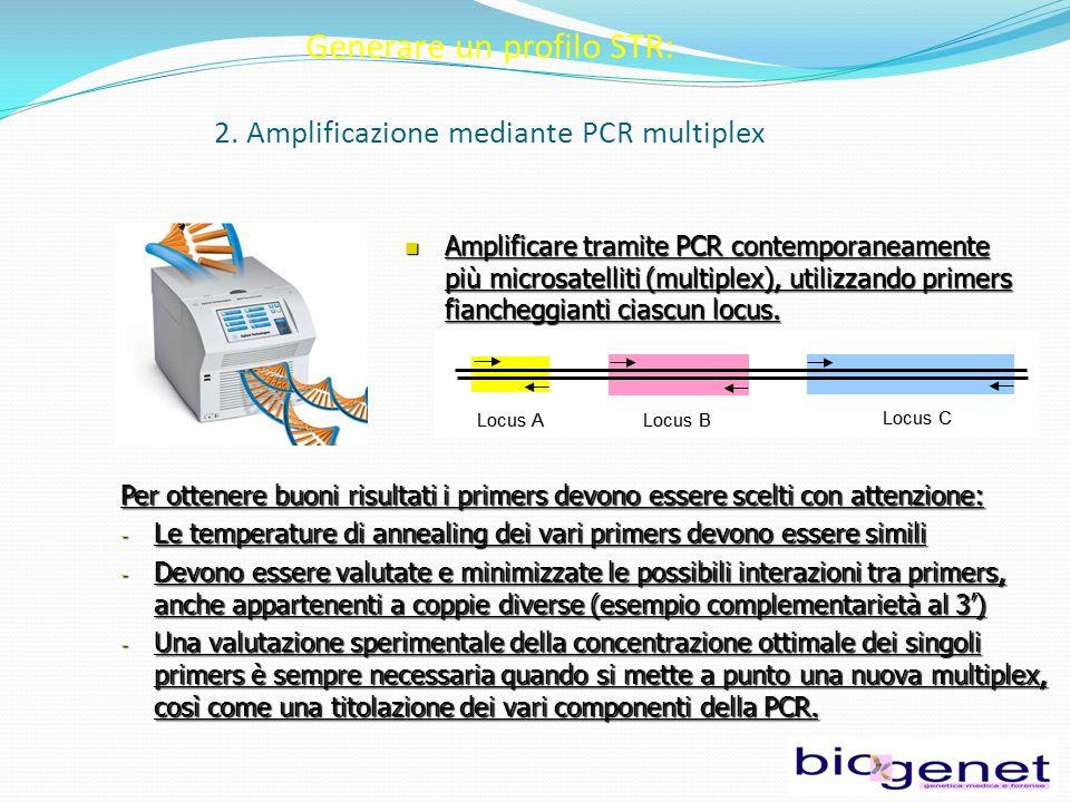 Amplificare tramite PCR contemporaneamente più microsatelliti (multiplex), utilizzando primers fiancheggianti ciascun locus.