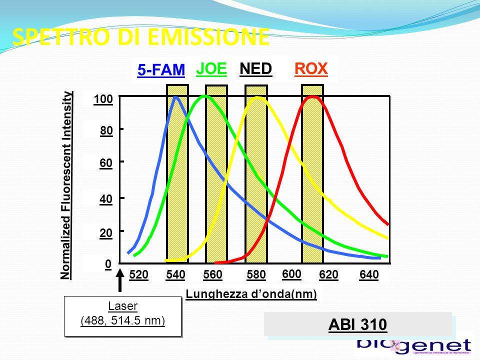 ABI 310 520540560580 600 620640 Lunghezza d'onda(nm) 100 80 60 40 20 0 5-FAM JOENEDROX Laser (488, 514.5 nm) Laser (488, 514.5 nm) Normalized Fluorescent Intensity SPETTRO DI EMISSIONE