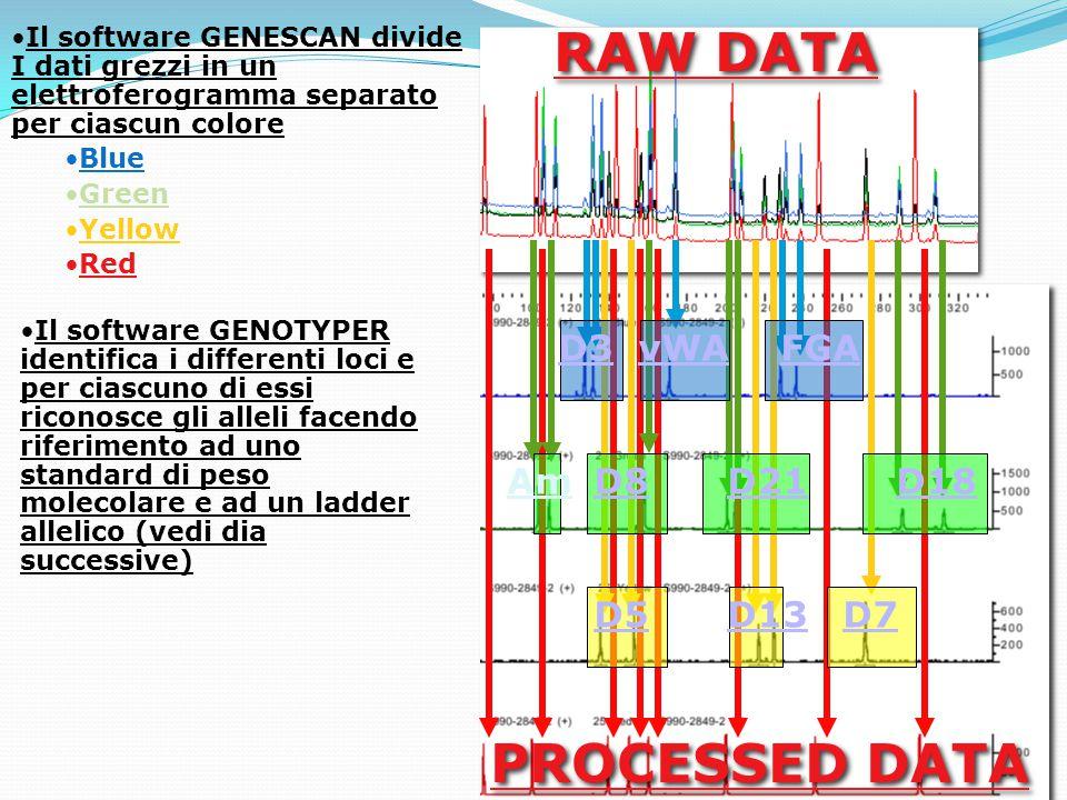D3vWAFGA D8D21D18 D5D13D7 Am RAW DATA PROCESSED DATA Il software GENESCAN divide I dati grezzi in un elettroferogramma separato per ciascun colore Blue Green Yellow Red Il software GENOTYPER identifica i differenti loci e per ciascuno di essi riconosce gli alleli facendo riferimento ad uno standard di peso molecolare e ad un ladder allelico (vedi dia successive)