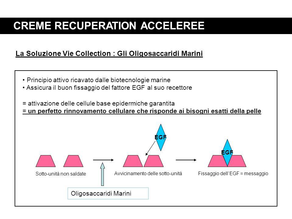 CREME RECUPERATION ACCELEREE EGF Avvicinamento delle sotto-unitàFissaggio dell'EGF = messaggio La Soluzione Vie Collection : Gli Oligosaccaridi Marini