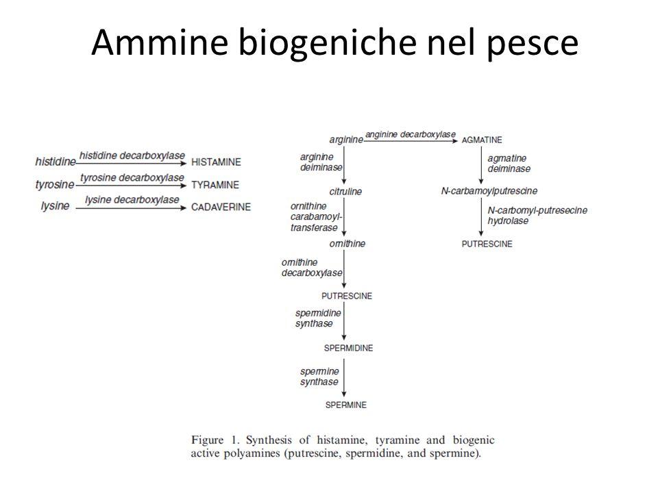 Ammine biogeniche nel pesce