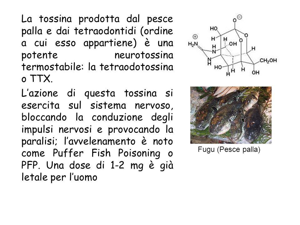 La tossina prodotta dal pesce palla e dai tetraodontidi (ordine a cui esso appartiene) è una potente neurotossina termostabile: la tetraodotossina o TTX.