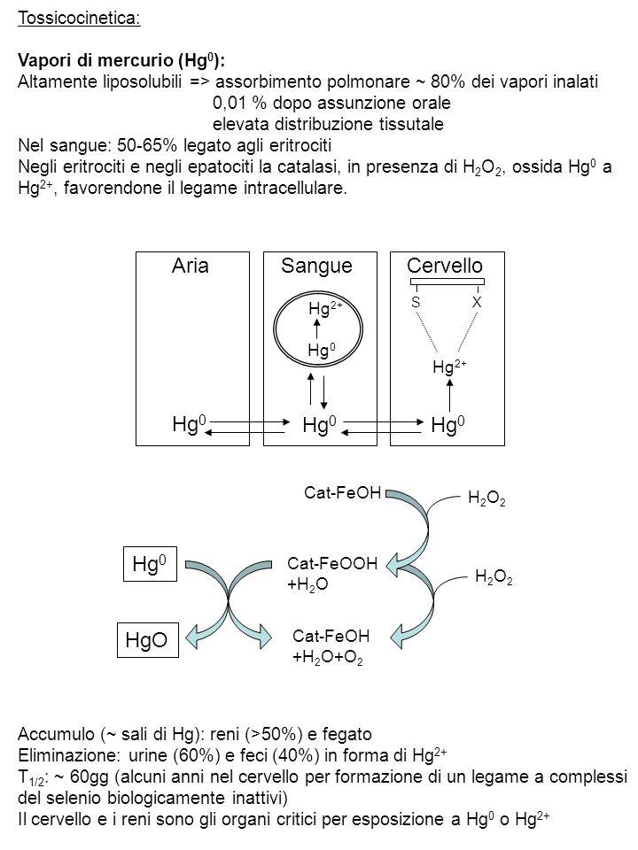 Tossicocinetica: Vapori di mercurio (Hg 0 ): Altamente liposolubili => assorbimento polmonare ~ 80% dei vapori inalati 0,01 % dopo assunzione orale el