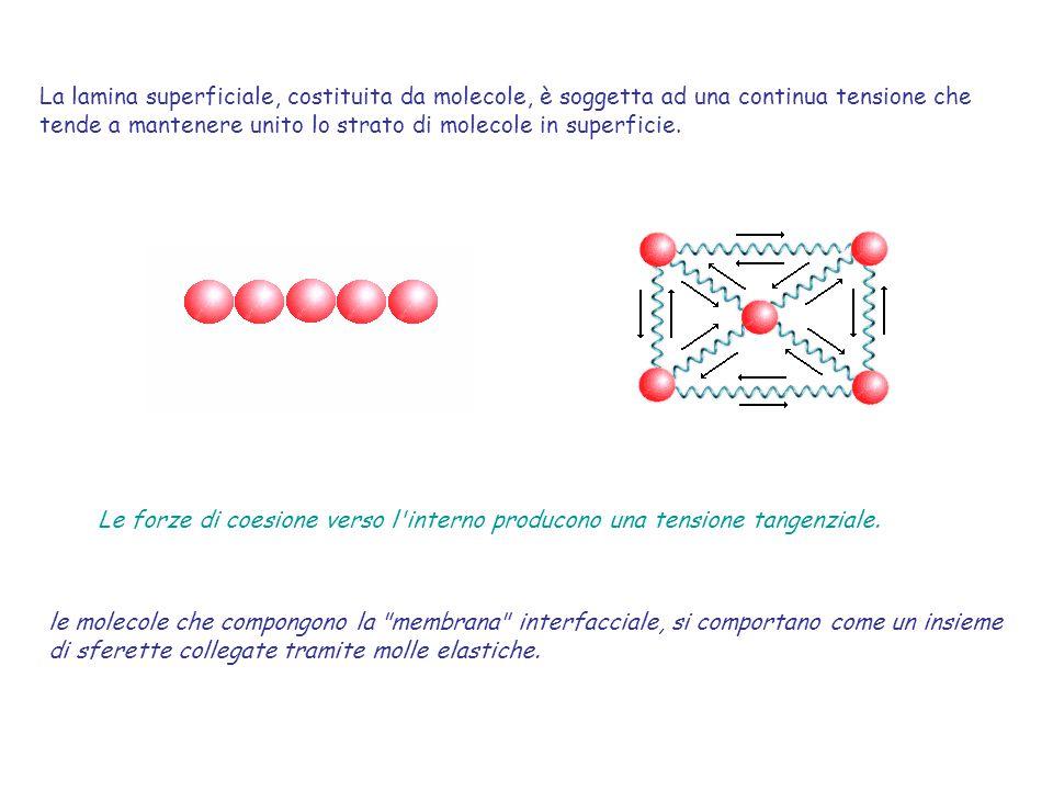 La lamina superficiale, costituita da molecole, è soggetta ad una continua tensione che tende a mantenere unito lo strato di molecole in superficie. L