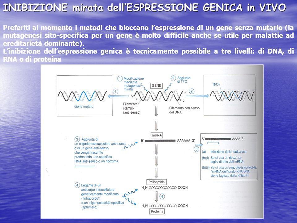 INIBIZIONE mirata dell'ESPRESSIONE GENICA in VIVO Preferiti al momento i metodi che bloccano l'espressione di un gene senza mutarlo (la mutagenesi sito-specifica per un gene è molto difficile anche se utile per malattie ad ereditarietà dominante).