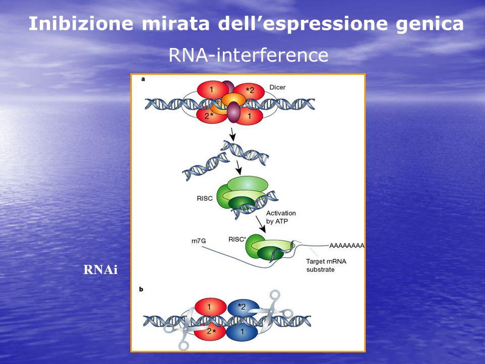 RNA-interference RNAi Inibizione mirata dell'espressione genica