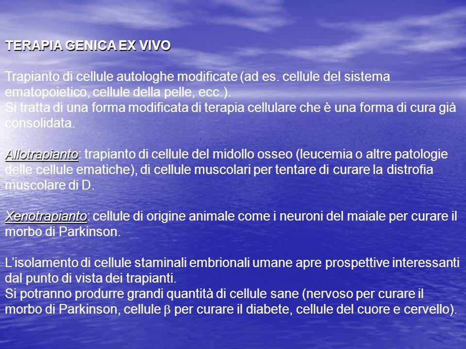 TERAPIA GENICA EX VIVO Trapianto di cellule autologhe modificate (ad es.