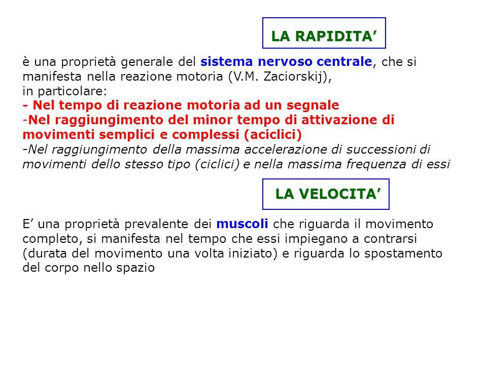 LA RAPIDITA' LA RAPIDITA' è una proprietà generale del sistema nervoso centrale, che si manifesta nella reazione motoria (V.M. Zaciorskij), in partico