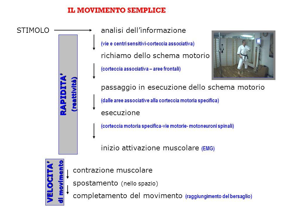I MOVIMENTI COMPLESSI (più movimenti semplici collegati tra loro in sequenza= azione) STIMOLOMovimento 1 (attivazione x gruppi muscolari) tempo di collegamento (elaborazione centrale) Movimento 2 (attivazione y gruppi muscolari) tempo di collegamento (elaborazione centrale) Movimento 3 (attivazione z gruppi muscolari) tempo di effettuazione movimenti 1-2-3 completamento dell'azione RAPIDITA' di azione di azione VELOCITA' di azione