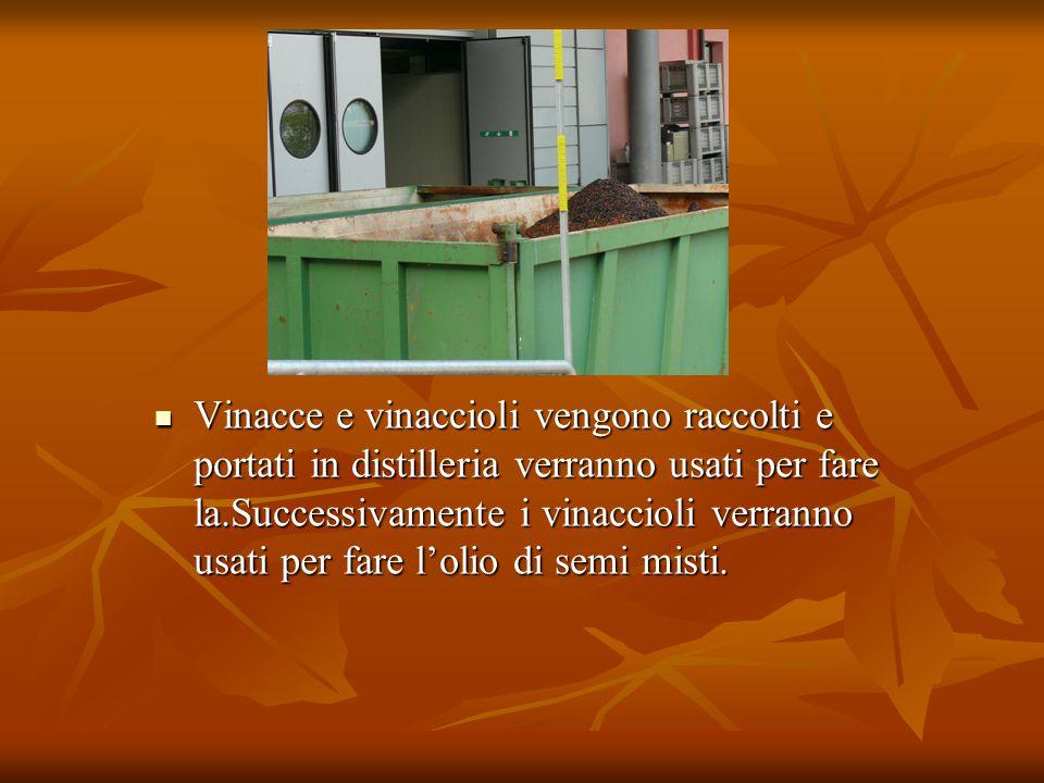 Vinacce e vinaccioli vengono raccolti e portati in distilleria verranno usati per fare la.Successivamente i vinaccioli verranno usati per fare l'olio