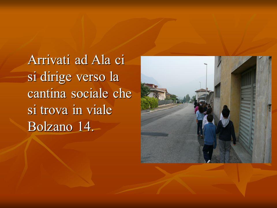 Arrivati ad Ala ci si dirige verso la cantina sociale che si trova in viale Bolzano 14. Arrivati ad Ala ci si dirige verso la cantina sociale che si t