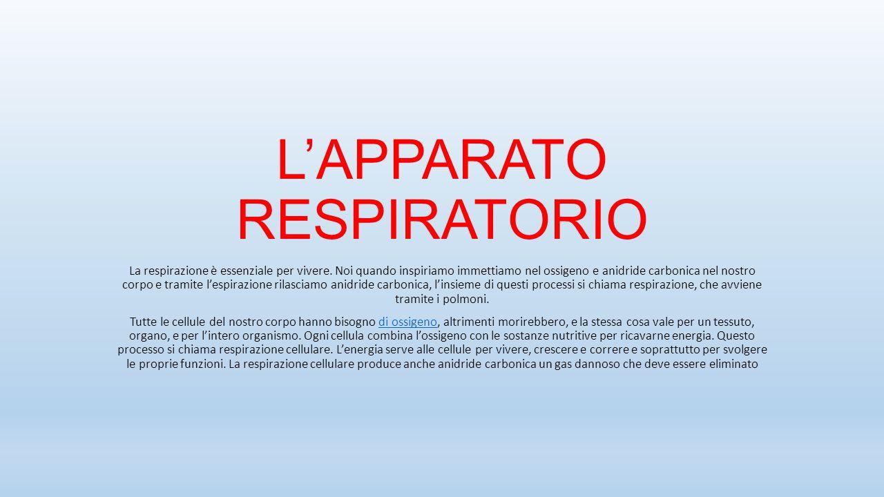 L'APPARATO RESPIRATORIO La respirazione è essenziale per vivere. Noi quando inspiriamo immettiamo nel ossigeno e anidride carbonica nel nostro corpo e